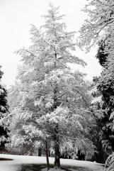 Cedar iin White.jpg