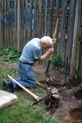 Dad Rodgers Planting Roses